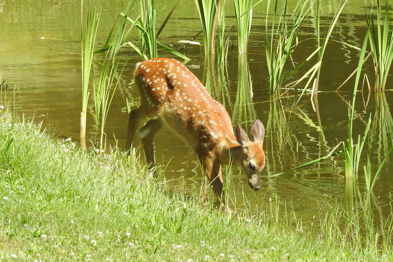 Water Baby in Ontario County (photo)